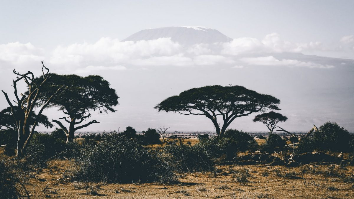 Five Poems By South Sudanese Poet, Marial Awendit